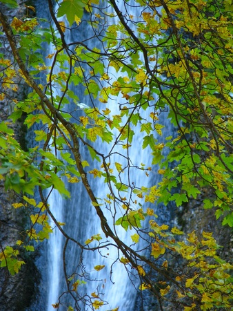 Image of autumn leaves with waterfall in the background