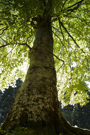 Image of large tree at the end of summer Stock Photo