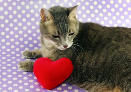 Sad kitty next to plushie heart Stock Photo