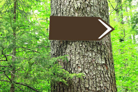 Blank direction sign on tree in forest Stock Photo