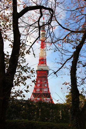 Tokyo Tower. Beautiful view between tree branches.