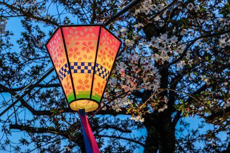 Japanese lantern at dusk, surrounded by cherry blossom trees (sakura).