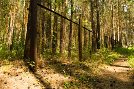 rabitz: road and fence in a pine forest