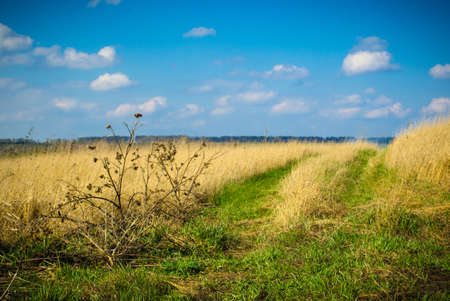 sagebrush: panorama of the countryside in the spring
