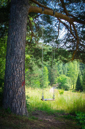 Swinging empty childrens swing in forest photo