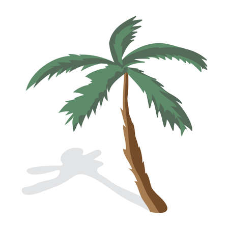 palm tree fruit: Coconut palm trees isolated on white background. Palm tree on a sunny summer day vacation. Vector flat illustration Illustration