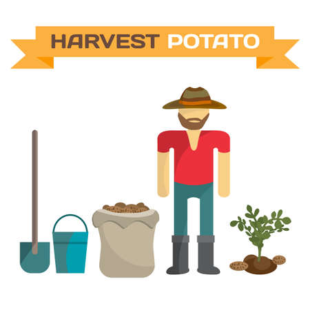 harvesting: Man harvesting potato in the field, cartoon flat vector illustration isolated on white background. Manual labor, shovel, bucket, sack, bush potatoes Illustration