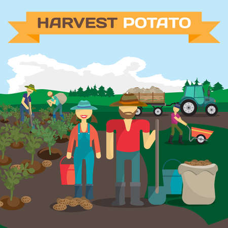 People harvesting potato in a field in the village. Manual labor, tractor with trailer, shovel, bucket, sack, bush potatoes, rural view. Cartoon flat vector illustration Illustration