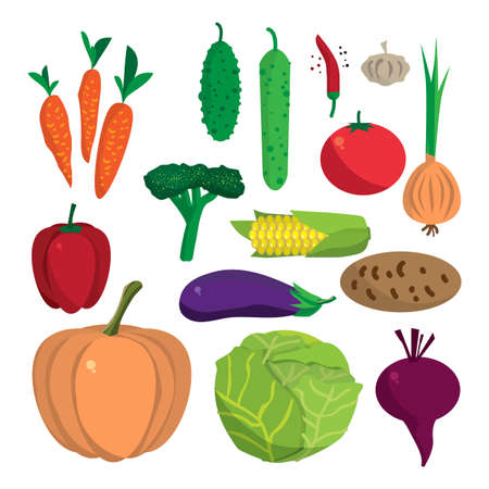 cucurbit: Farm vegetables flat vector cartoon set. Organic healthy food symbols. Harvest autumn infographic elements. Agriculture design