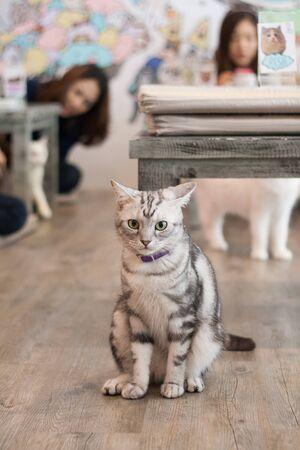 gray cat: Gray cat on wooden floor