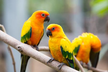 loros verdes: cerrar coloridas aves posarse en el árbol Foto de archivo