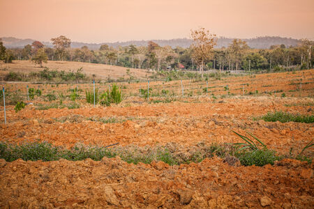 tree grow up on lateritic land photo