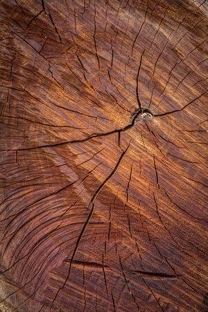 close up of a wood texture