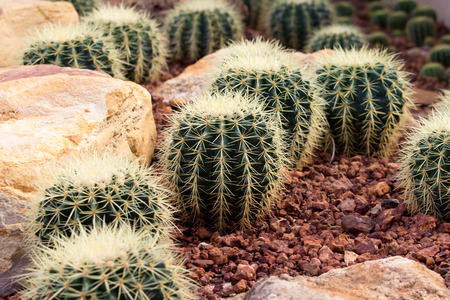 spikey: cactaceae have a lot of spike