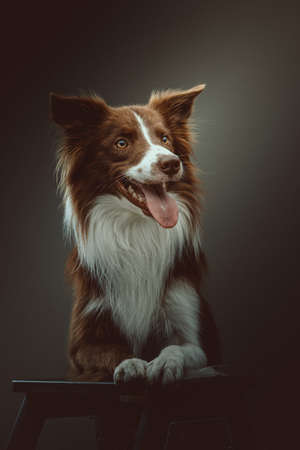 Happy border collie dog. Studio shot. Moody dark lighting, dark background.