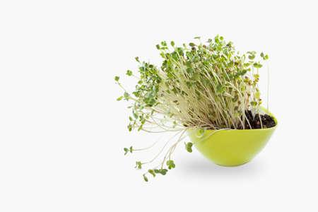 Yong-salade in groene pot?