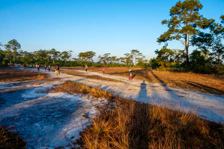 phukradueng: People Hiking on the top of mountain. during winter. in the moring after sunrise with sunlight. walk trough the nature and forest