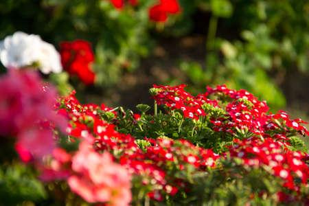 flora: red flora