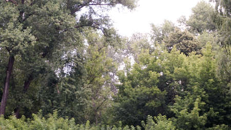 the tops of green trees by the river.