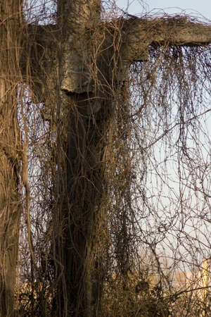 Tall statue or structure covered in leafless creepers and vines trailing downwards from the top against a blue sky