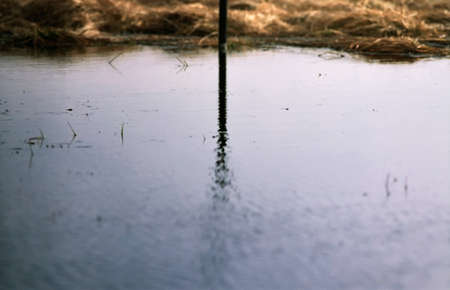 Water reflection of some kind stick or rod with lots of copyspace