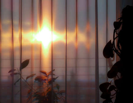 Silhouetted home plants against sun piercing through curtains