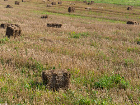 hay: hay and grass