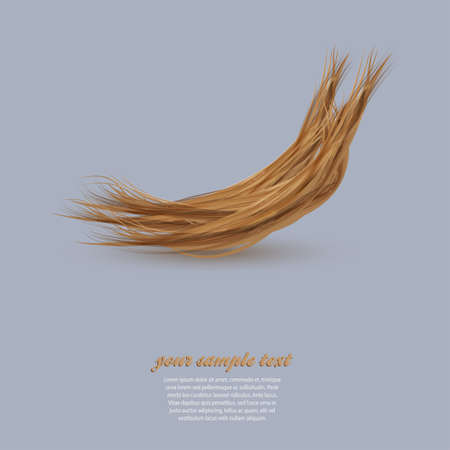 hairstyling: Hair Salon dise�o. corte de pelo o un s�mbolo peluquer�a