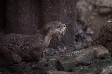 small clawed: Wild Otter, looking to have some fun