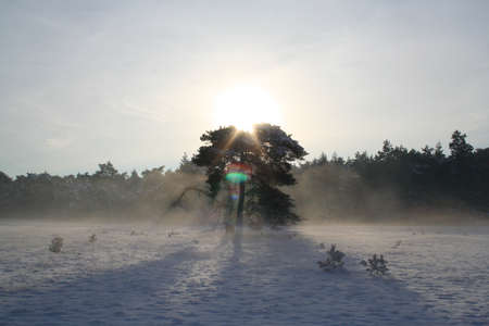 veluwe: A tree in the snow in National Parc de Hoge Veluwe Stock Photo