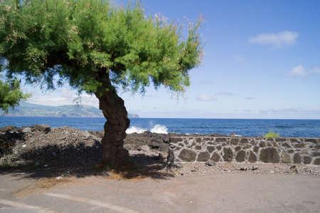 madalena: Ocean view with tree on Pico Stock Photo