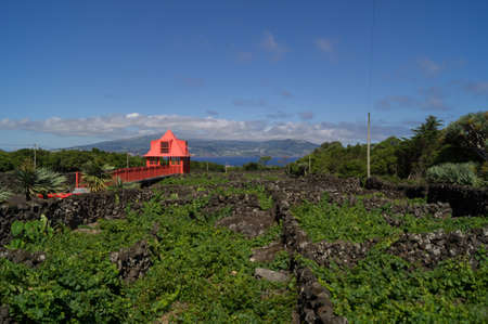 View post over the vineyard in Madelena Pico Stock Photo