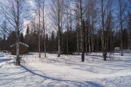 forrest: The forrest in snow in Lapland