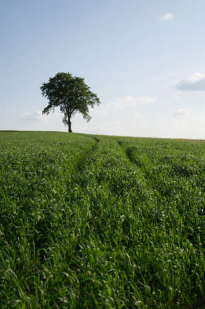 wallonie: A lonely tree in a field