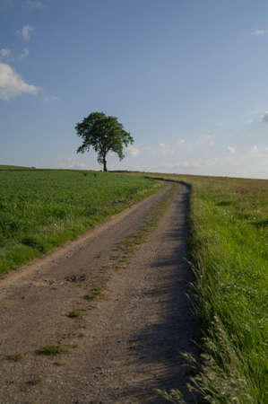 A dirt road towards a tree Stock Photo