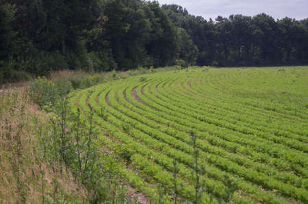 cultivable: The lines in a cultivated field
