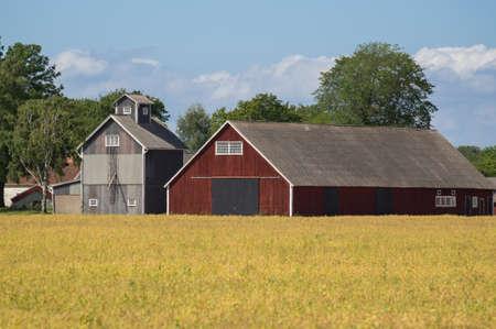 red barn: Swedish Falu red barn in a field