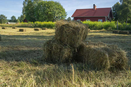Hay bales in a field in Sweden Stock Photo