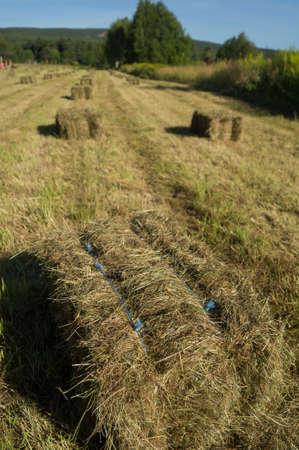 スウェーデンのフィールドで干し草の俵 写真素材