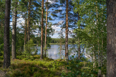 view through: A view through the trees of a forrest to a lake in Sweden
