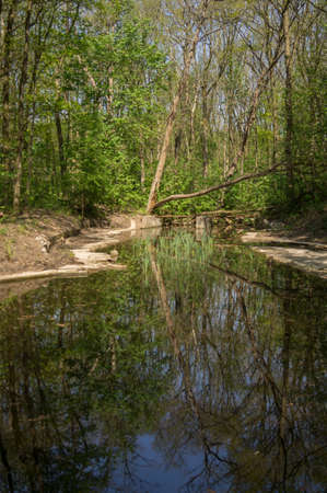 tree works: The reflection of a tree in the water of the  in Flevoland in The Netherlands