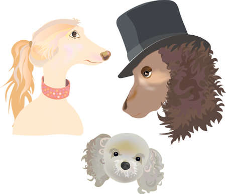 Three portraits of a beautiful dog family consist of: dog mother, dog father and little pappy dog son.