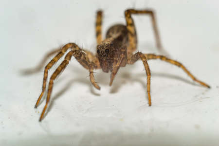 Close up of a spider macro photo