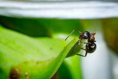 the ant floats close-up macro insect green leaf Stock Photo