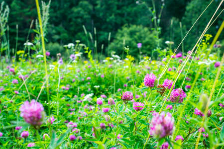 flowers summer South field amazing color love Stock Photo