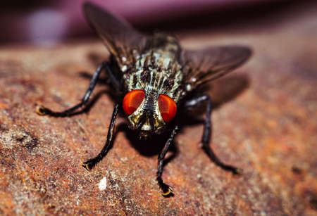 A house fly close-up portrait in the wild macro Stock Photo