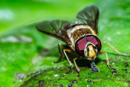 A house fly close-up portrait in the wild macro Zdjęcie Seryjne