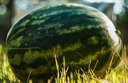 large watermelon Stock Photo