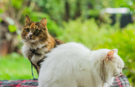 moggy: two cats white and color