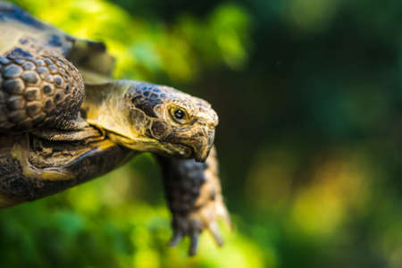 turtle close-up flying turtle green background